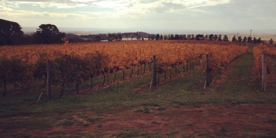 De Salis Vineyard