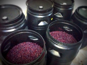 Garage Winemaking - Fermenting Merlot