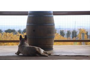 De Salis Wines Cellar Door
