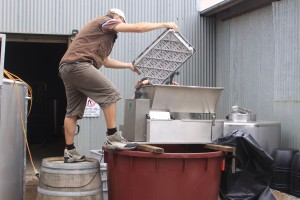 Processing Merlot Grapes Through Destemmer