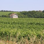 Champagne Vineyards with Henriot
